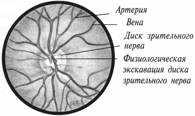 Один из отделов зрительного нерва