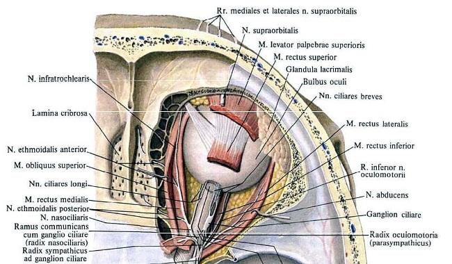 Функции тройничного нерва
