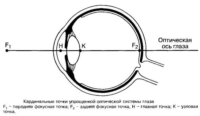 Особенности оптической системы глаза