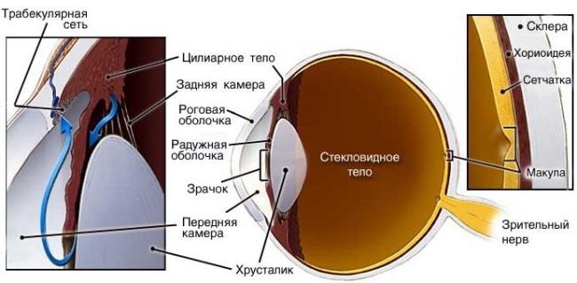 Водянистая влага нормального глаза